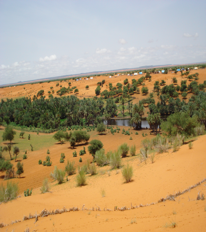 Dune stabilisation