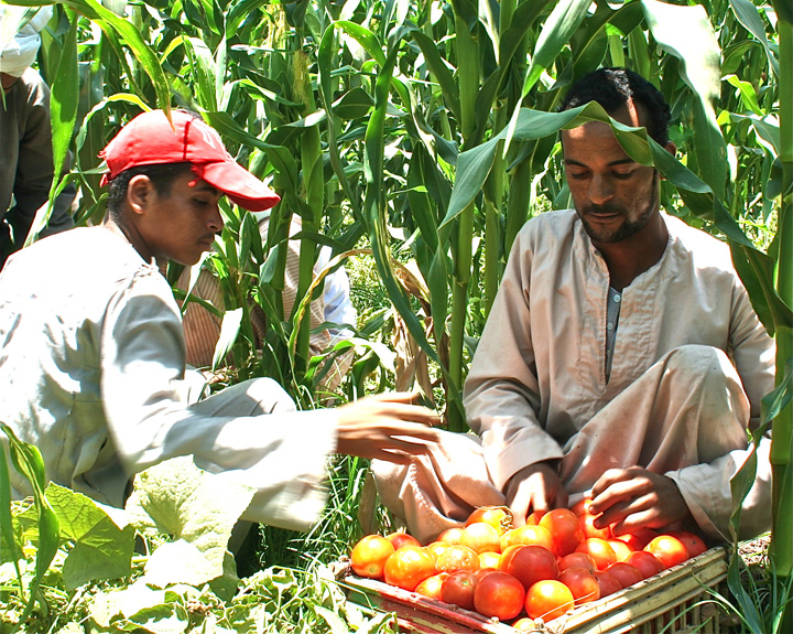 SALASEL trained farmers selling their produce