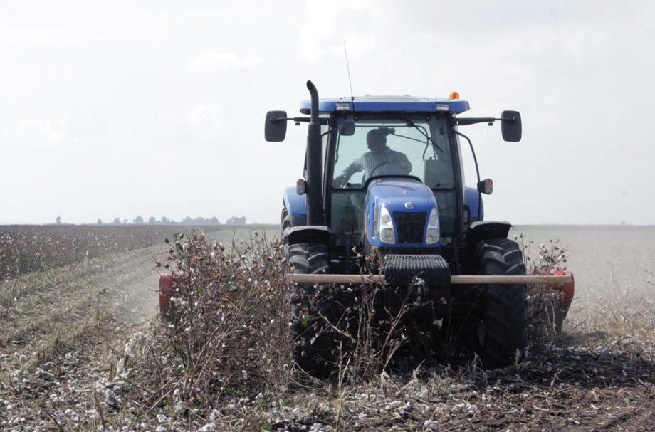 Clearing land for agriculture