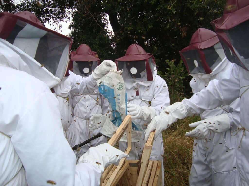 Beekeeping: not envisioned in the project document but initiated based on local requests