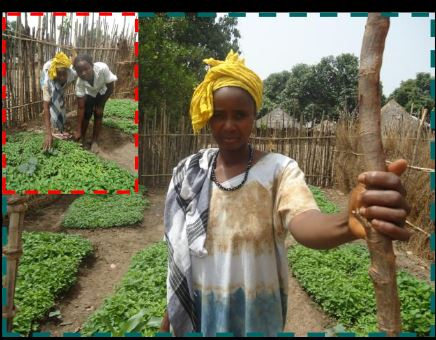 Ana Sila (inset), a student of the Dandum School,inspired her mother Sira Boi Camara to plant a garden at home