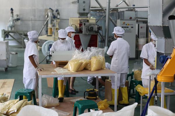 Timor Vita production facility