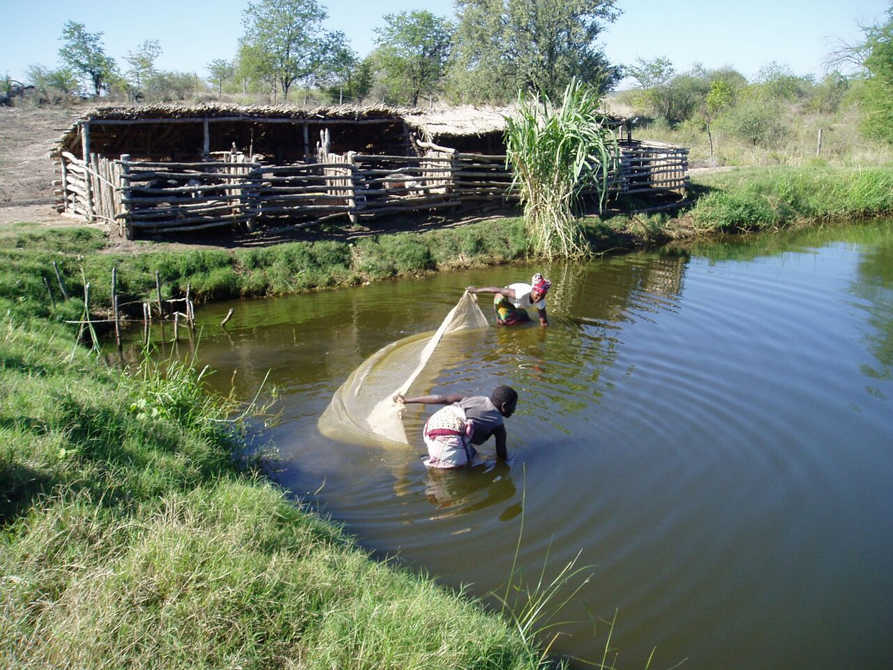 Integrated fish farming in Mapuvule