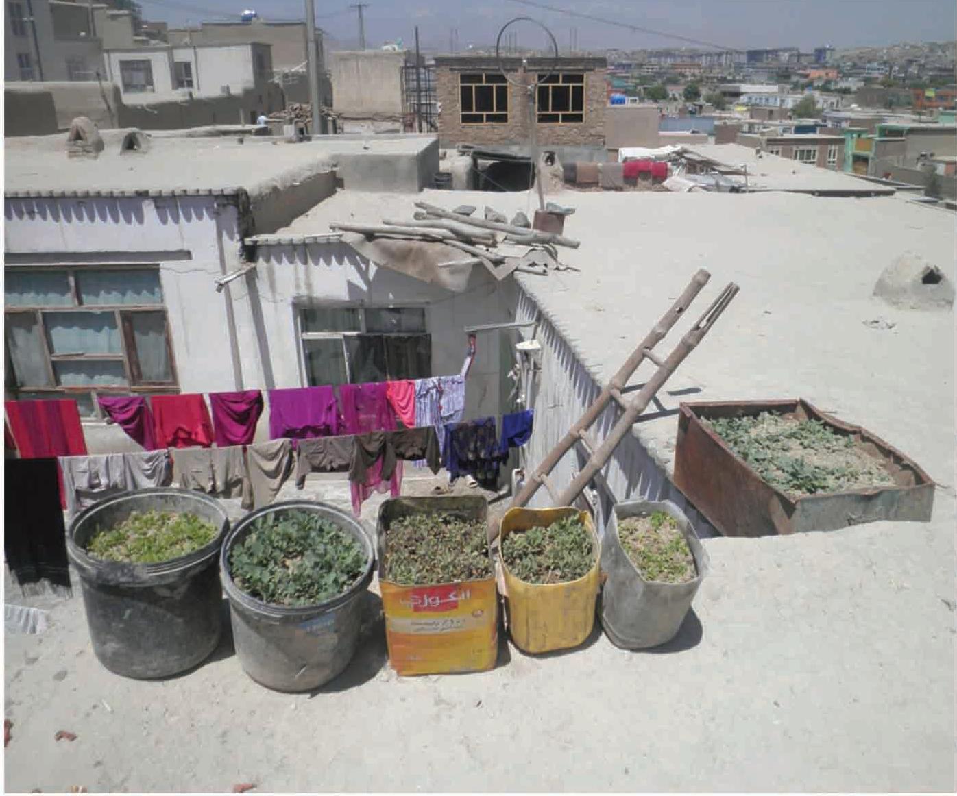 Micro-jardín en Kabul