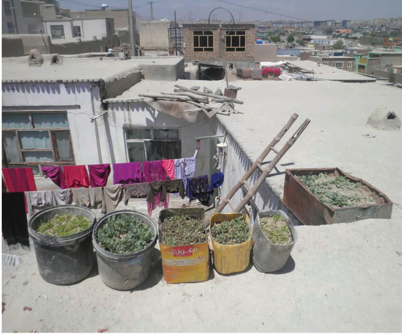 Micro-garden in Kabul