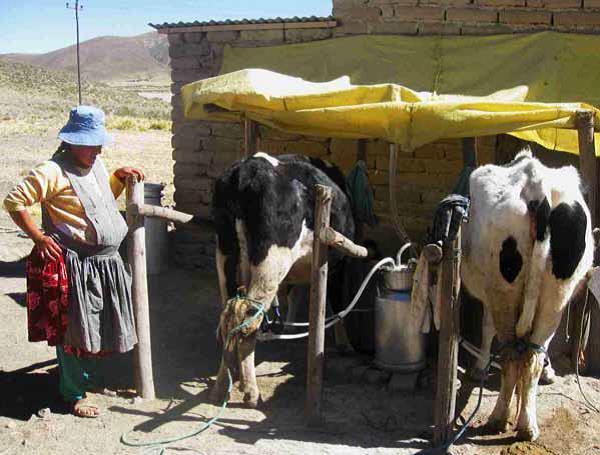 La estrategia fue proporcionar recursos a las familias rurales excluidas a partir del apoyo a las mujeres