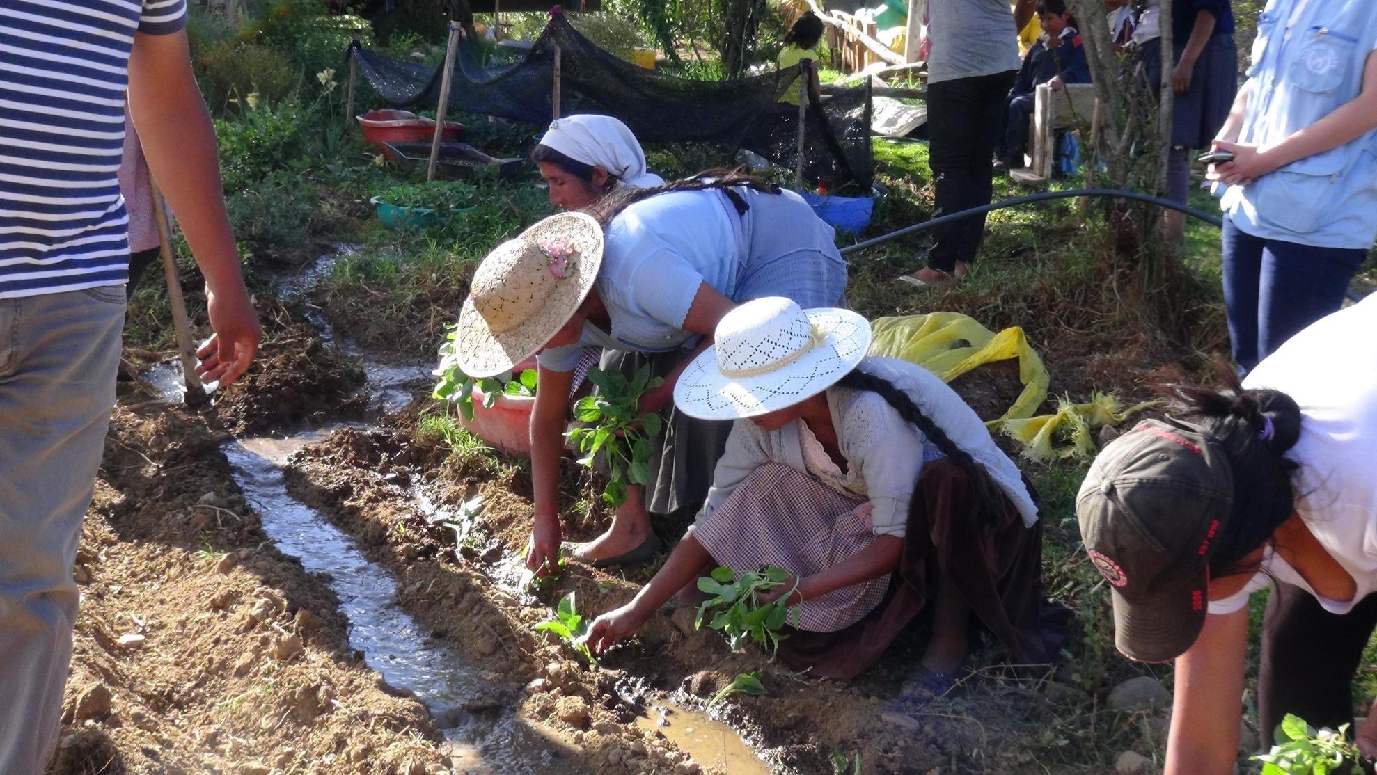 En Bolivia, sólo el 1,2% de las tierras están a nombre de mujeres