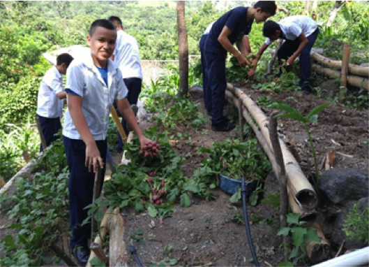 Students, teachers and parents work in school vegetable garden to promote learning about food production