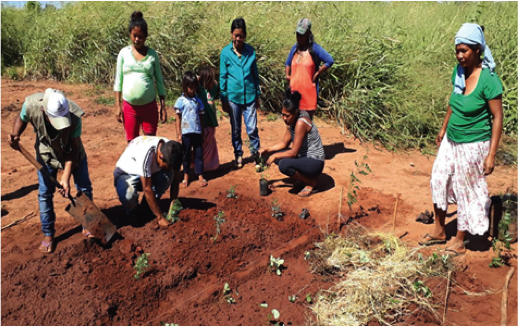 The joint programme supported establishment of school garden in Caaguazú department to provide vegetables for students and their families