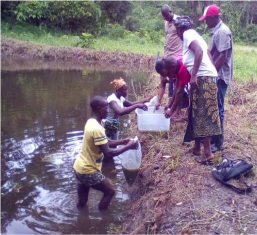 Youth received 800 fingerlings for stocking in pond