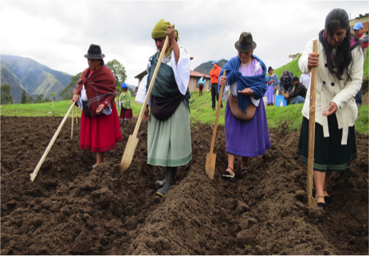 Women producers participate in trainig to diversify and improve production yields of quinoa and lupine crops
