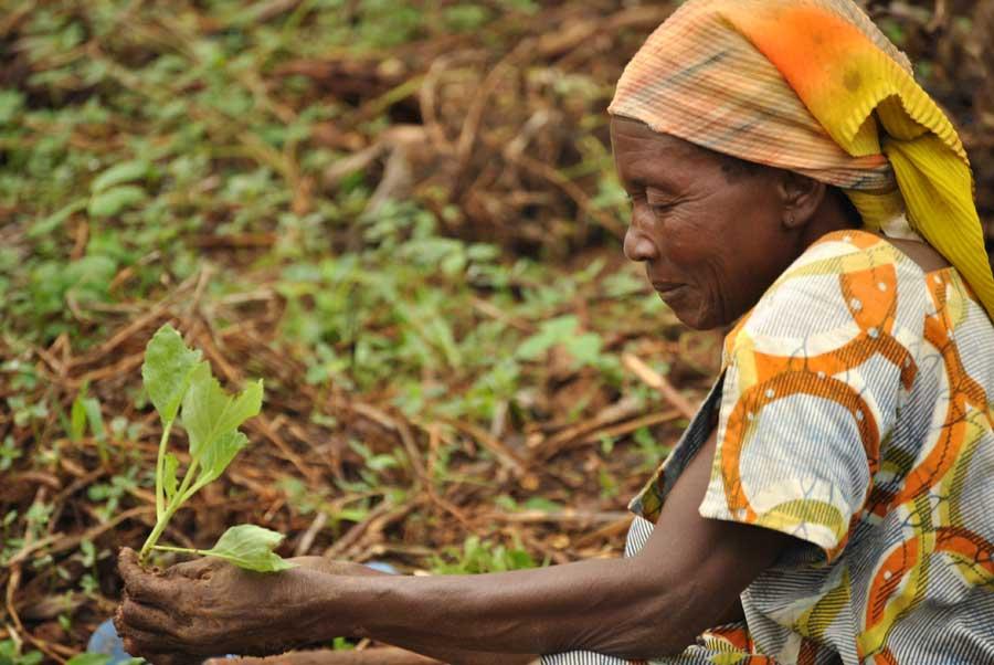 Farmer in North kivu
