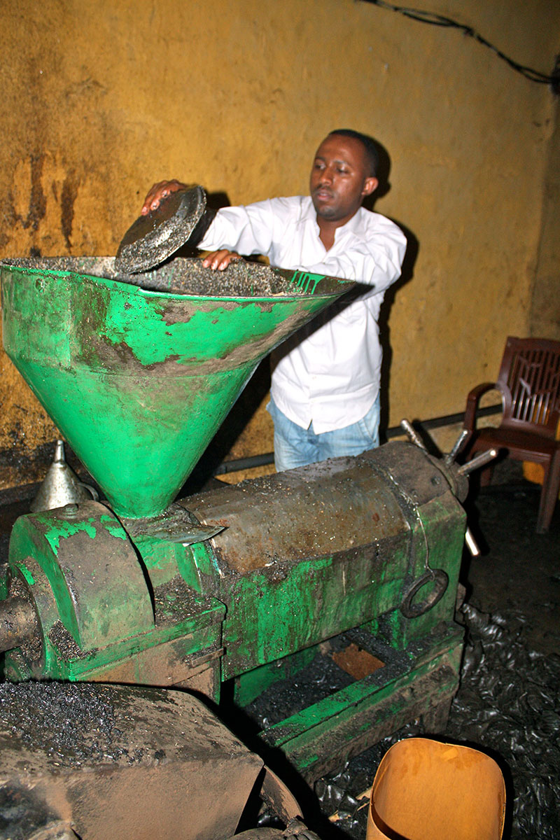 Worker processing oilseeds