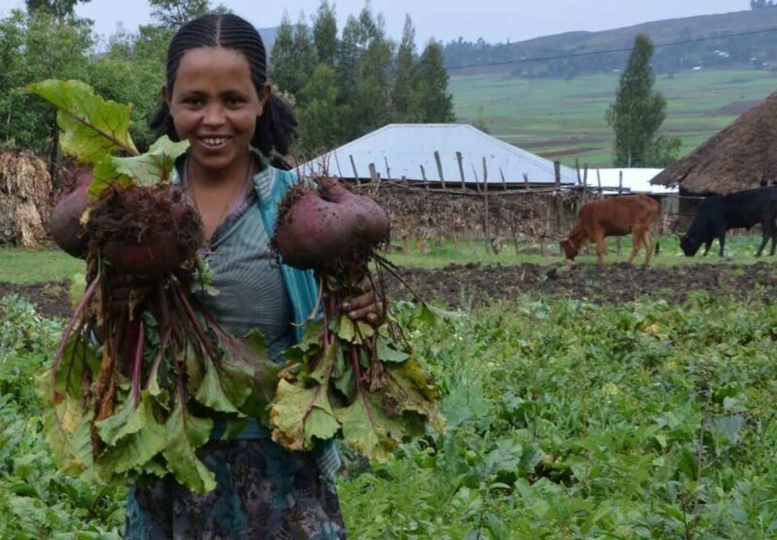 A woman harvest vegetables SDG Fund/UN Women/Fikerte Abebe